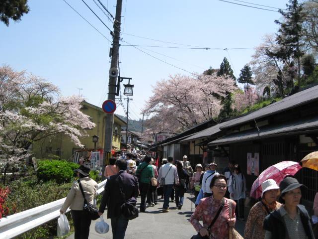 09-yoshino-sakura41.JPG