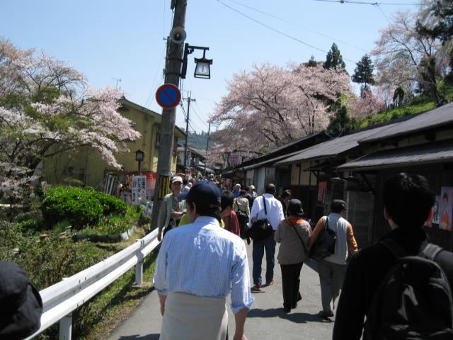 09-yoshino-sakura42.JPG