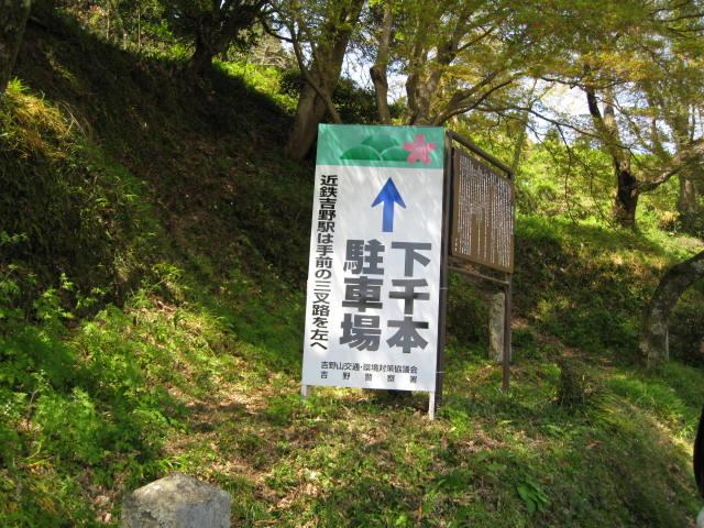 09-yoshino-sakura49.JPG