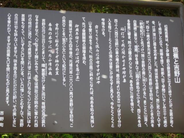 09-yoshino-sakura50.JPG