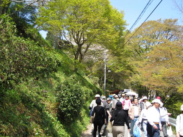 09-yoshino-sakura51.JPG