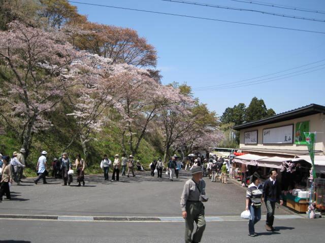 09-yoshino-sakura56.JPG