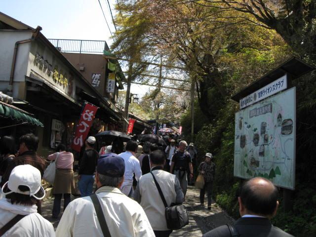 09-yoshino-sakura62.JPG