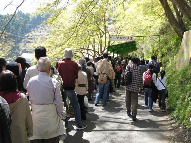09-yoshino-sakura9.JPG