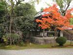 10-koyo-kyoto279.JPG