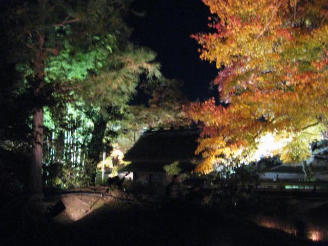 10-koyo-kyoto428.JPG