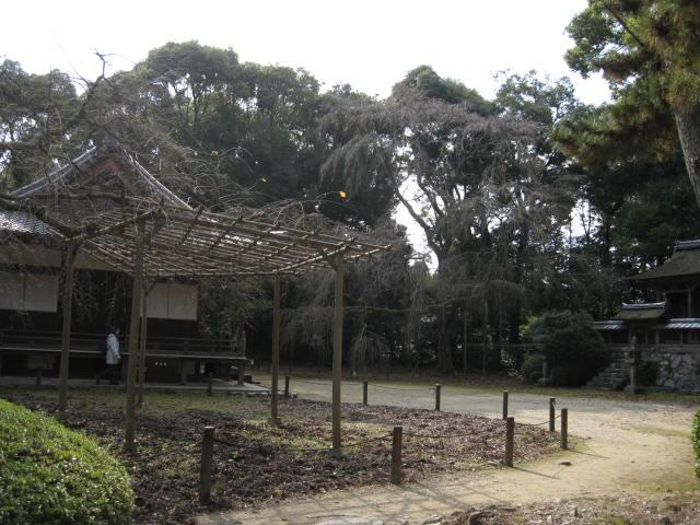 10-koyo-kyoto481.JPG
