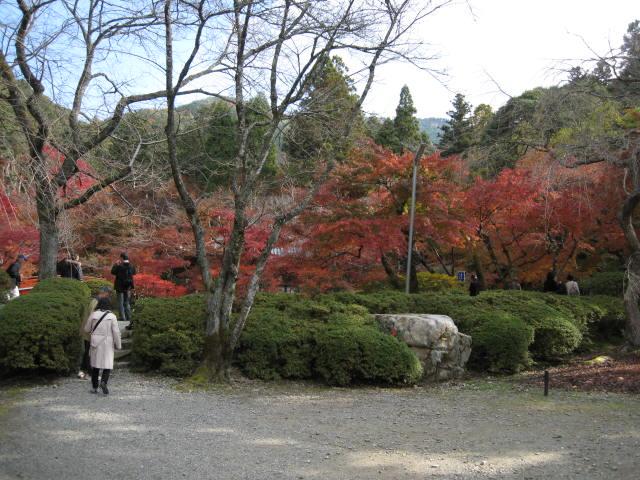 10-koyo-kyoto498.JPG