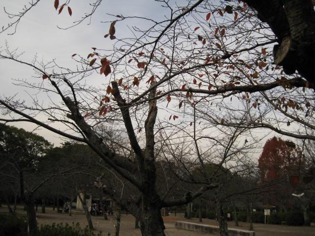 10-koyo-kyoto594.JPG