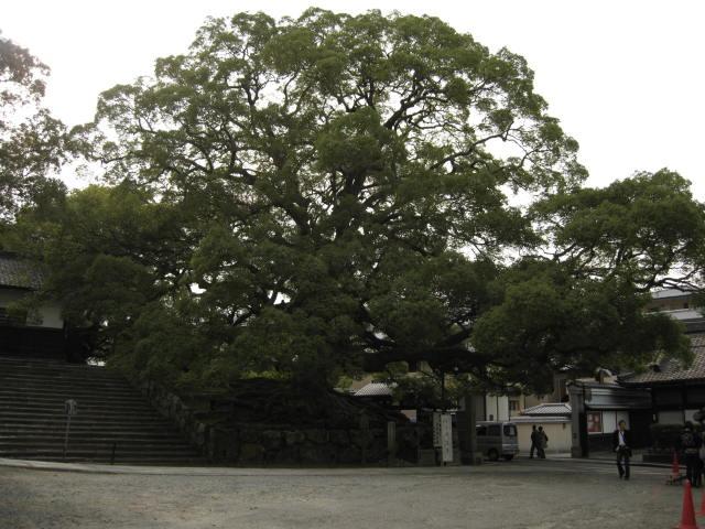 10-koyo-kyoto612.JPG