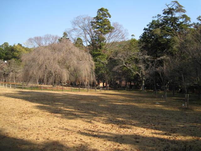 10-koyo-kyoto771.JPG