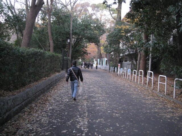 10-koyo-kyoto896.JPG