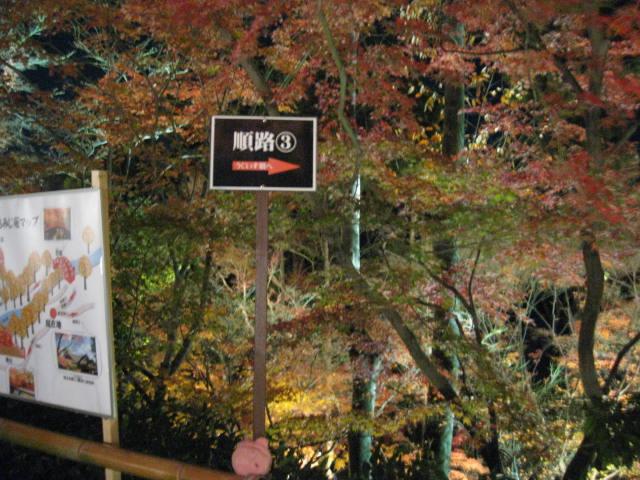 10-koyo-kyoto923.JPG