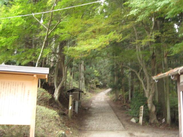 10-koyo-yoshino60.JPG