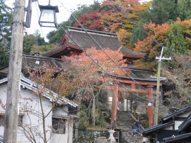 10-koyo-yoshino93.JPG