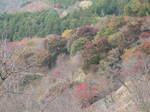 10-koyo-yoshino94.JPG