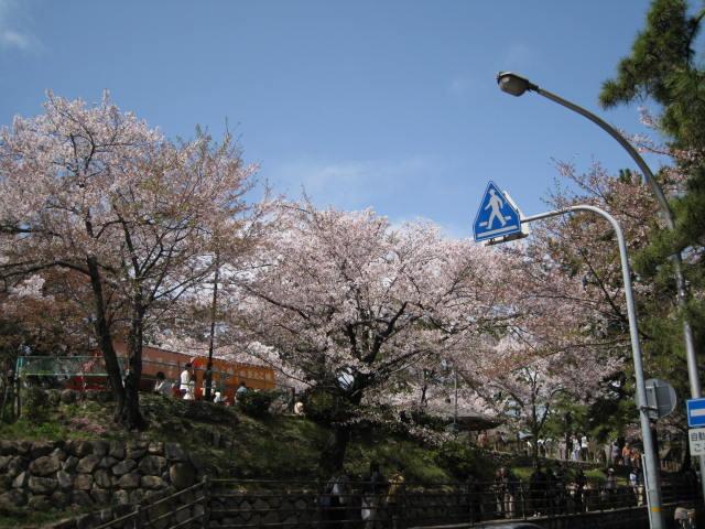 10-shukugawa-sakura47.JPG