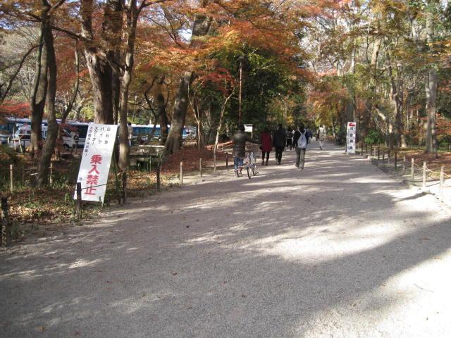 11-koyo-kyoto269.JPG