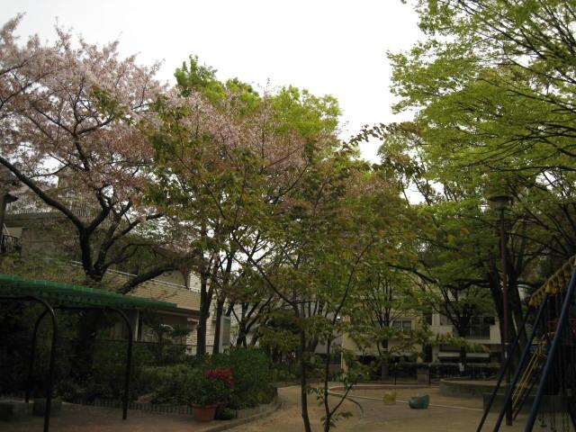 11-nishi-sakura2.JPG