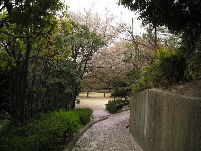 11-nishi-sakura6.JPG