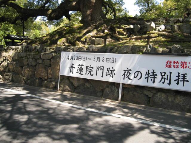 11-sp-kyoto237.JPG