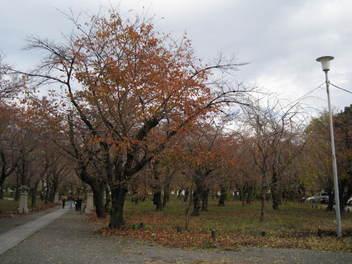 12-koyo-kyoto36.JPG