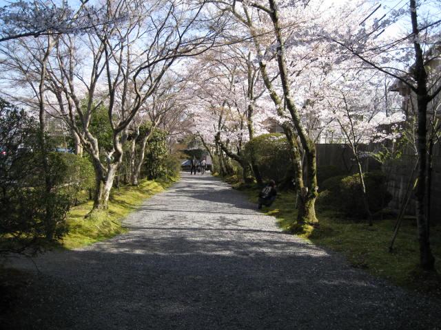 12-sakura-kyoto100.JPG