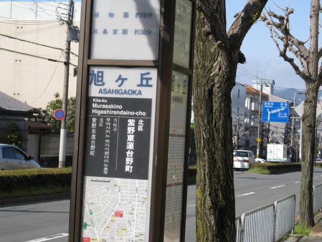 12-sakura-kyoto101.JPG