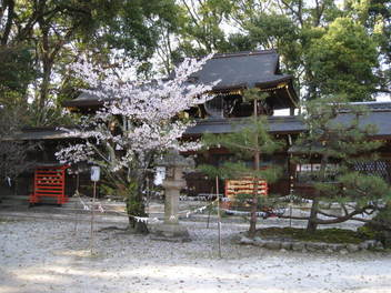 12-sakura-kyoto107.JPG