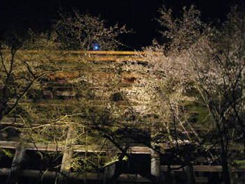 12-sakura-kyoto11.JPG
