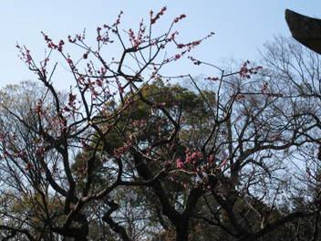12-sakura-kyoto111.JPG