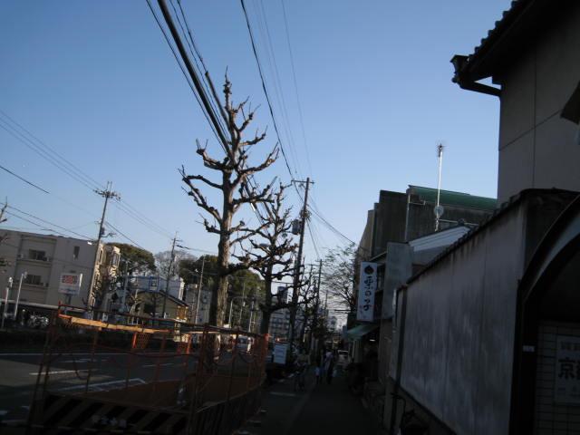 12-sakura-kyoto118.JPG