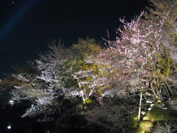 12-sakura-kyoto12.JPG