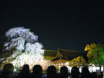 12-sakura-kyoto151.JPG