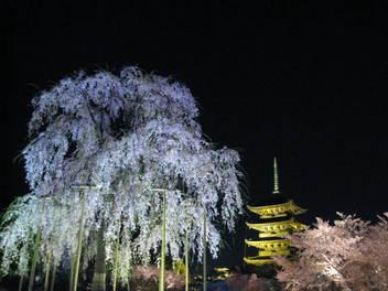 12-sakura-kyoto152.JPG