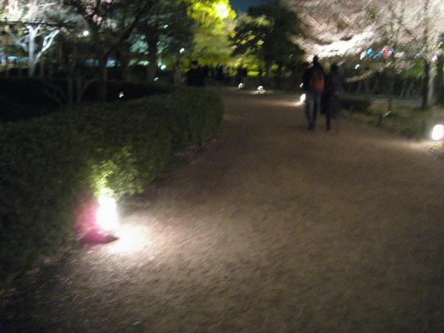 12-sakura-kyoto155.JPG