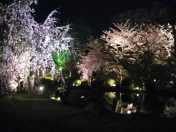 12-sakura-kyoto156.JPG