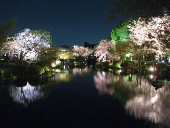 12-sakura-kyoto158.JPG