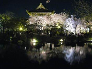 12-sakura-kyoto159.JPG