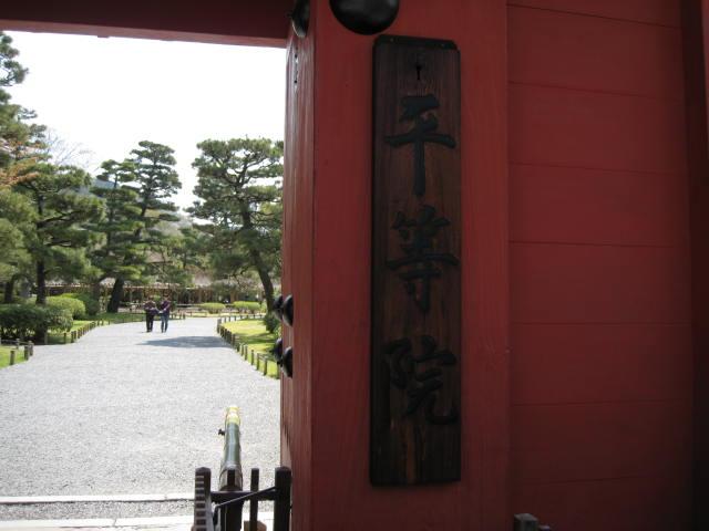 12-sakura-kyoto177.JPG