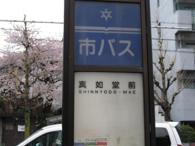 12-sakura-kyoto18.JPG
