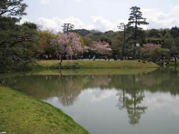 12-sakura-kyoto181.JPG