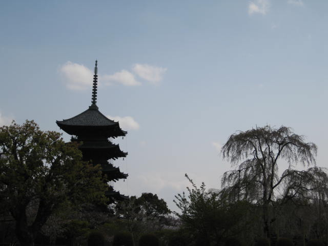 12-sakura-kyoto209.JPG