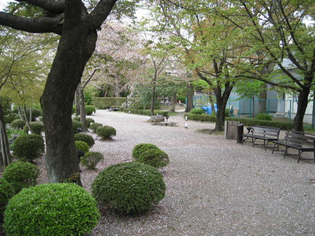 12-sakura-kyoto217.JPG
