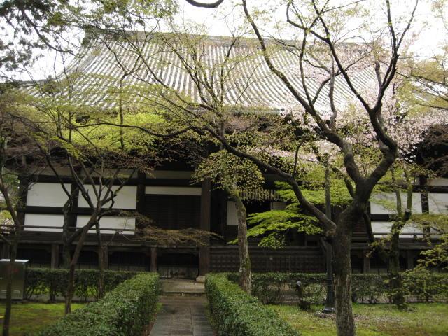 12-sakura-kyoto22.JPG