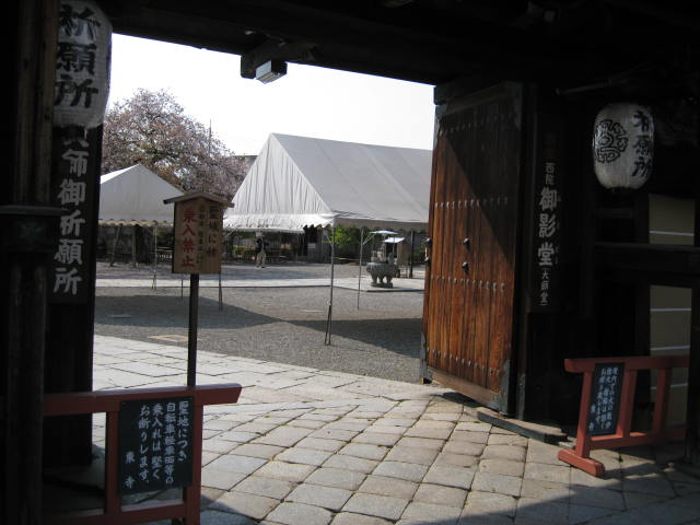 12-sakura-kyoto222.JPG