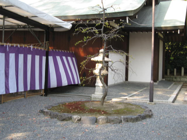 12-sakura-kyoto230.JPG