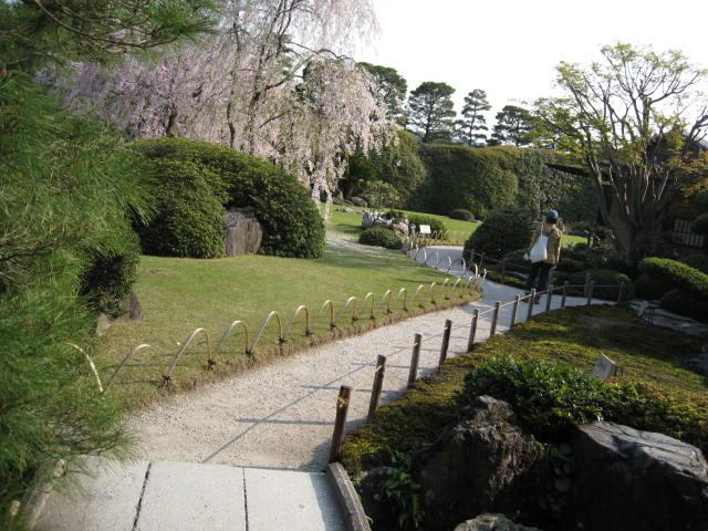 12-sakura-kyoto242.JPG