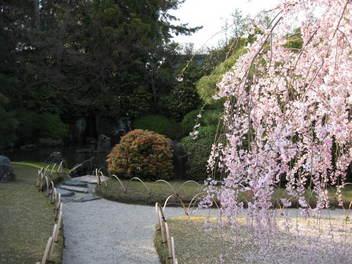 12-sakura-kyoto247.JPG