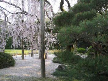 12-sakura-kyoto249.JPG